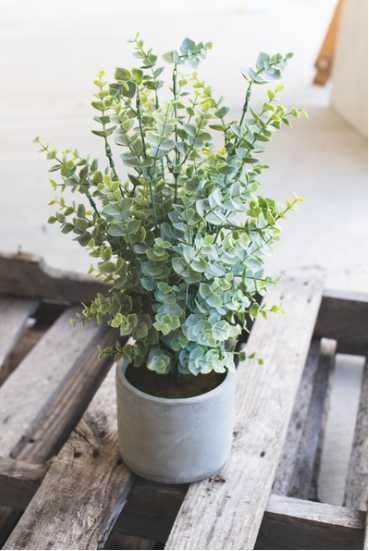 Artificial Boxwood in Cement Pot