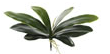 Succulent Orchid Leaves - 13 Hub Lane   |