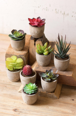 Miniature Succulents - 13 Hub Lane   |