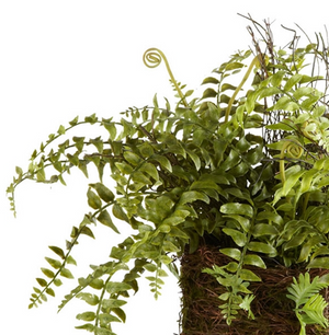 Boston Fern Rustic Drop-In - 13 Hub Lane   |