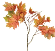 Maple Leaf Branches - 13 Hub Lane   |