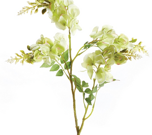 Wisteria Stem - 13 Hub Lane   |
