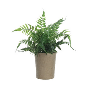 Faux Fern in Paper Pot - 13 Hub Lane   |