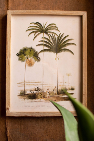 Framed Palm Tree Print - 13 Hub Lane   |