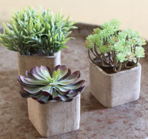 Small Artificial Succulent in a Square Pot - 13 Hub Lane   |