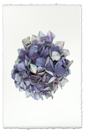 Hydrangea Wall Art - 13 Hub Lane   |  Wall Art