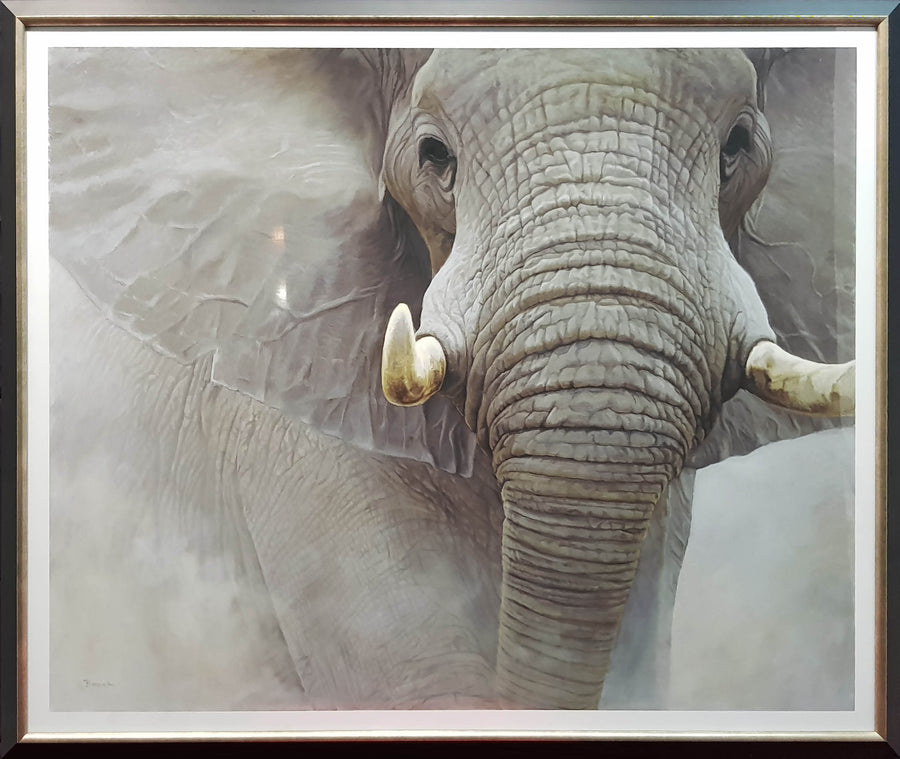 Framed Print of The Power of One Elephant