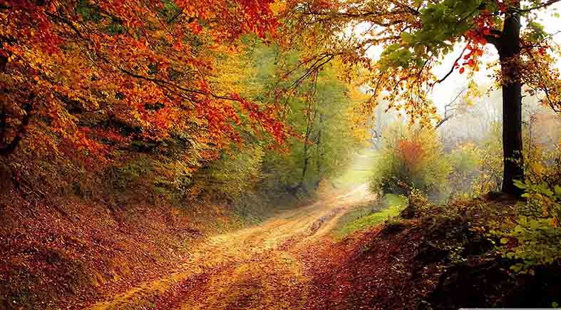 Canvas or Paper Print of Autumn Pathway No.2