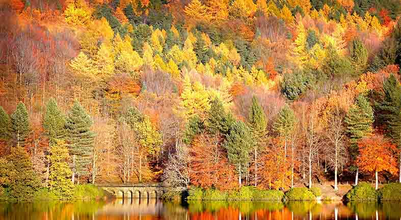 Canvas or Paper Print of Autumn And Lake