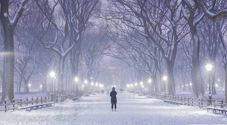 Canvas or Paper Print of  Winter in Central Park , New York