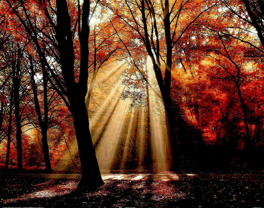 Canvas or Paper Print of Autumn Rays