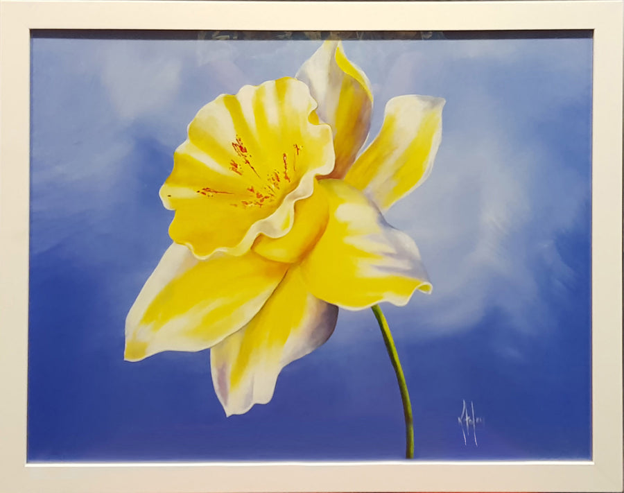 Framed Print of Buttercup
