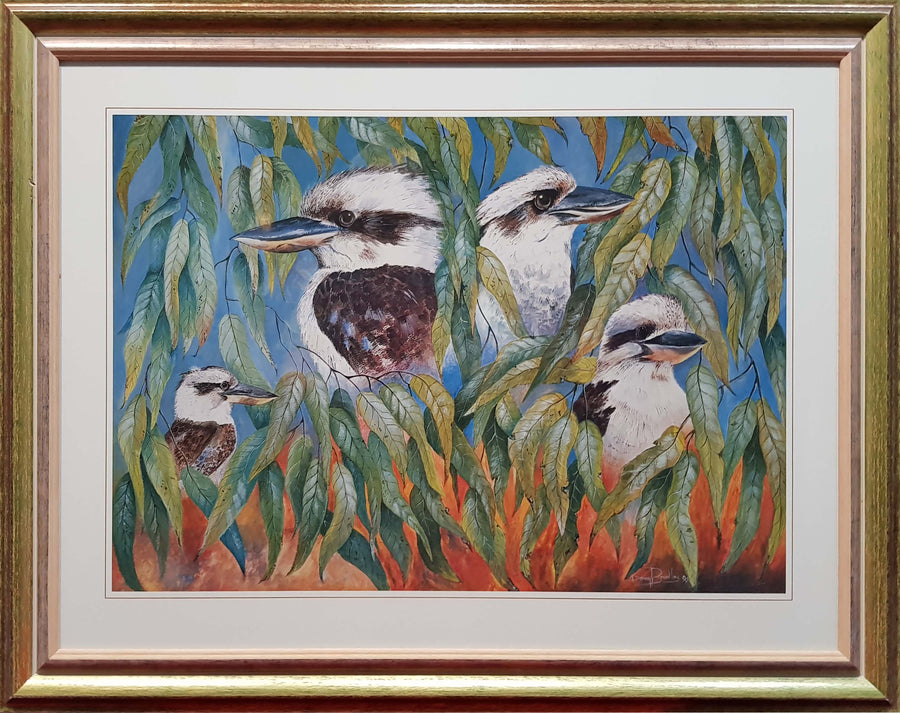 Framed Print of Kookaburras