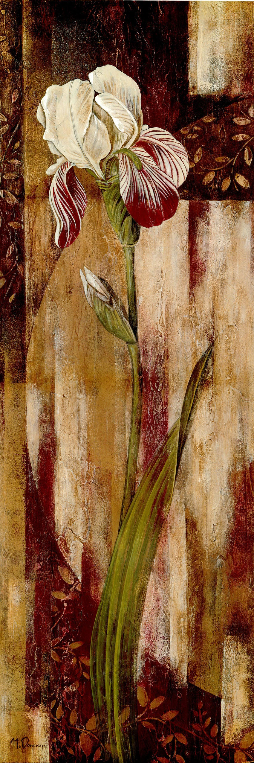 Canvas or Paper Print of Red White Iris