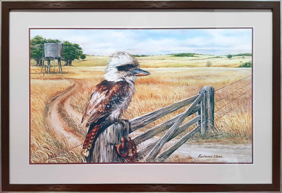 Framed Print of Kookaburra on Fence