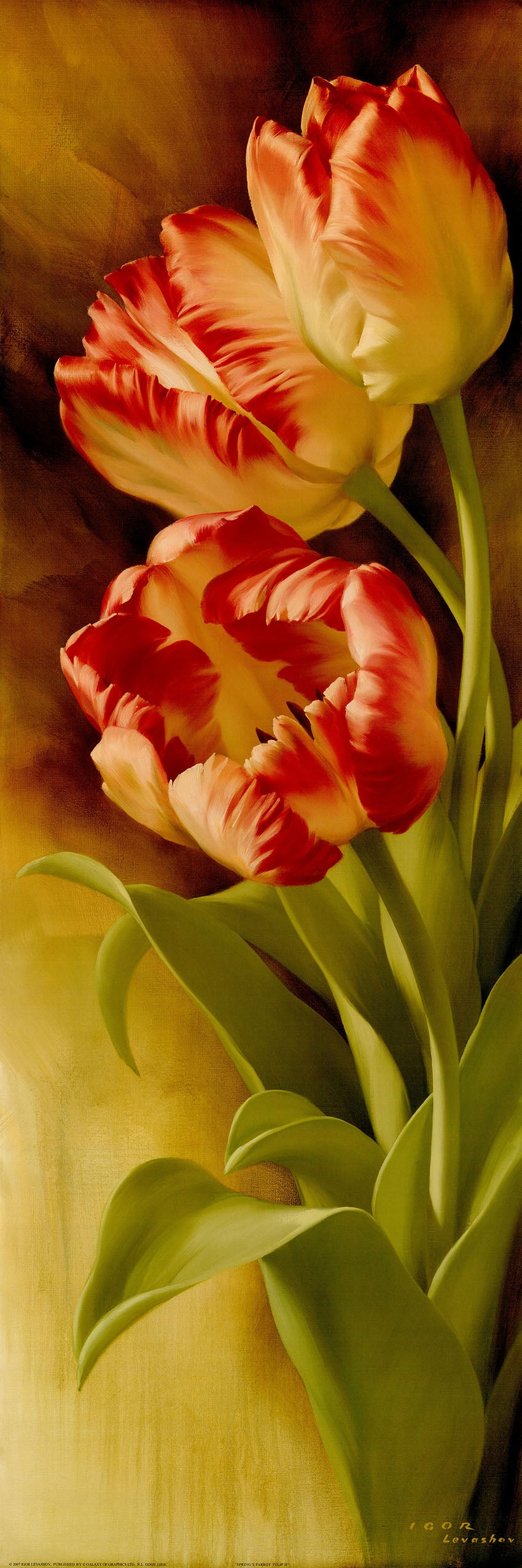Canvas or Paper Print of Red Tulips No.1