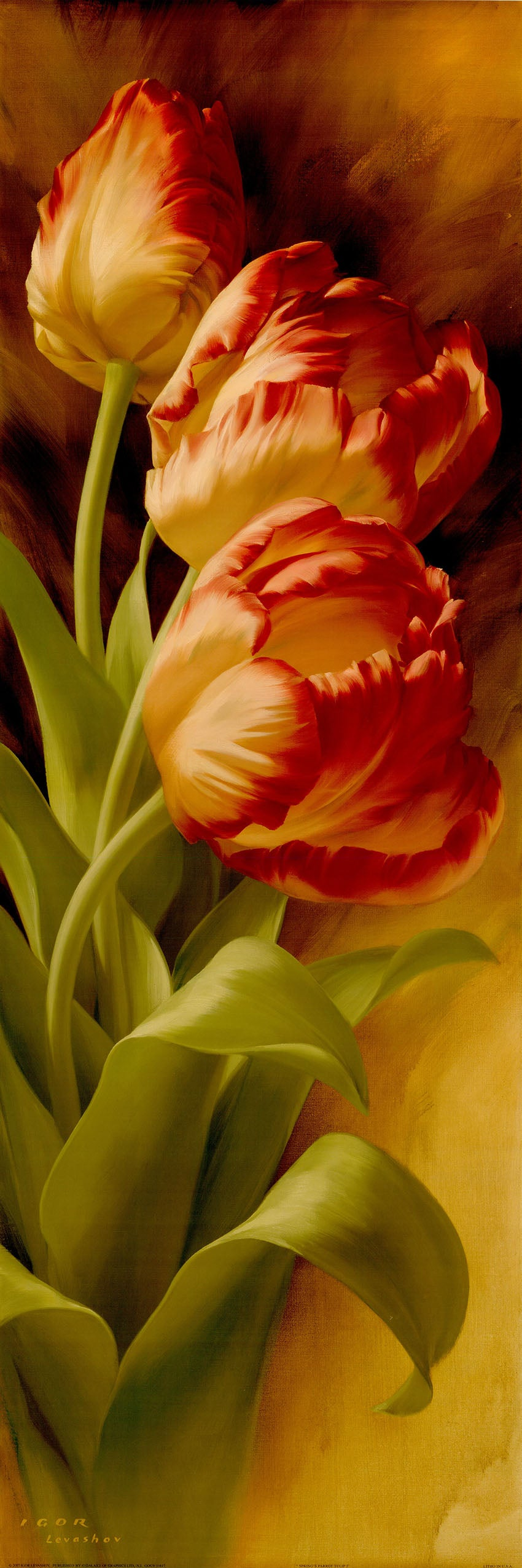 Canvas or Paper Print of Red Tulips No.2