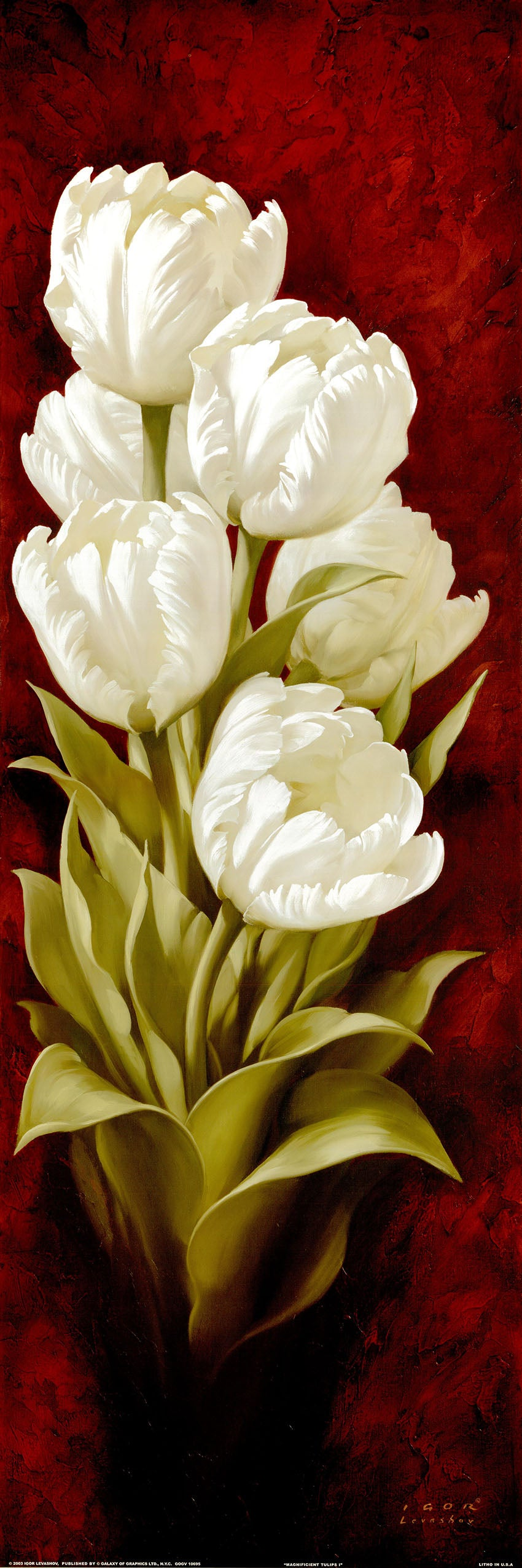 Canvas or Paper Print of White Tulips No.2