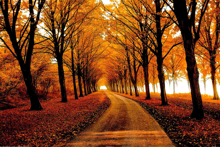 Canvas or Paper Print of Autumn Pathway