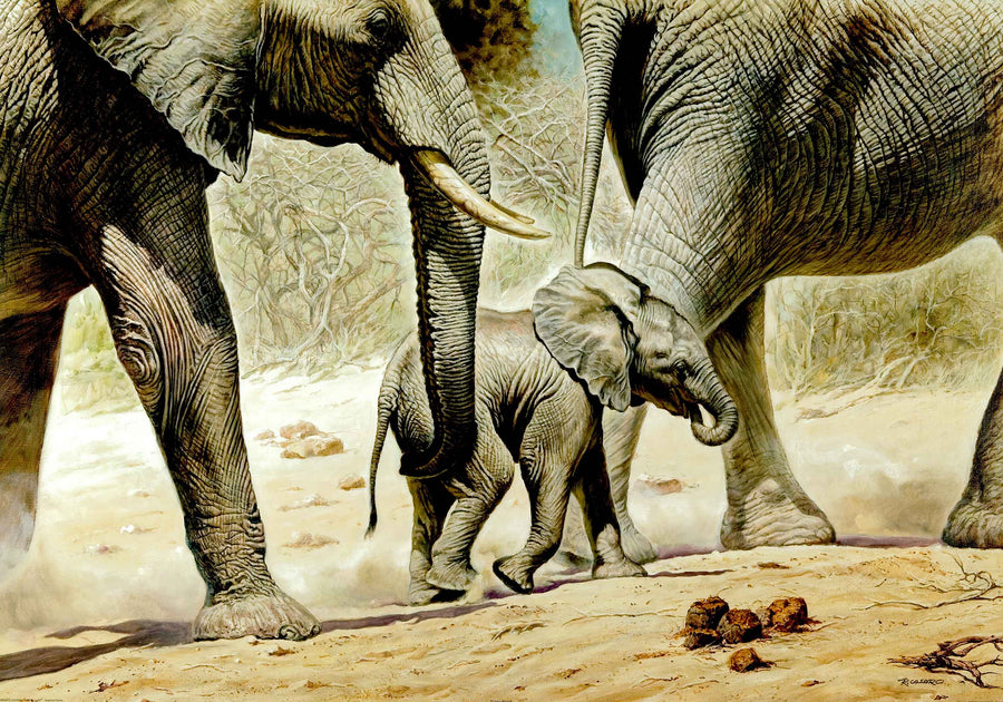 Canvas or Paper Print of Elephants