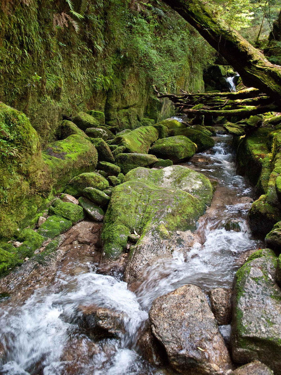 Canvas or Paper Print of Mossy Stream