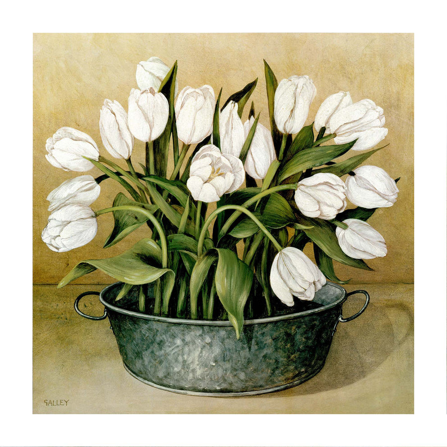 Canvas or Paper Print of White Tulips