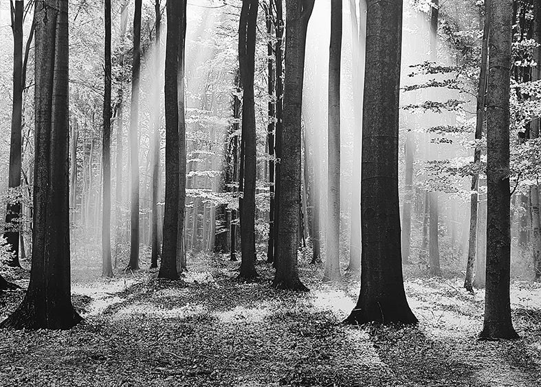 Framed Print of Forest B&W
