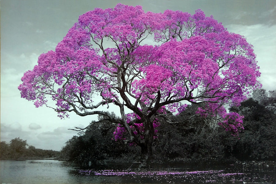 Framed Print of Pink Tree