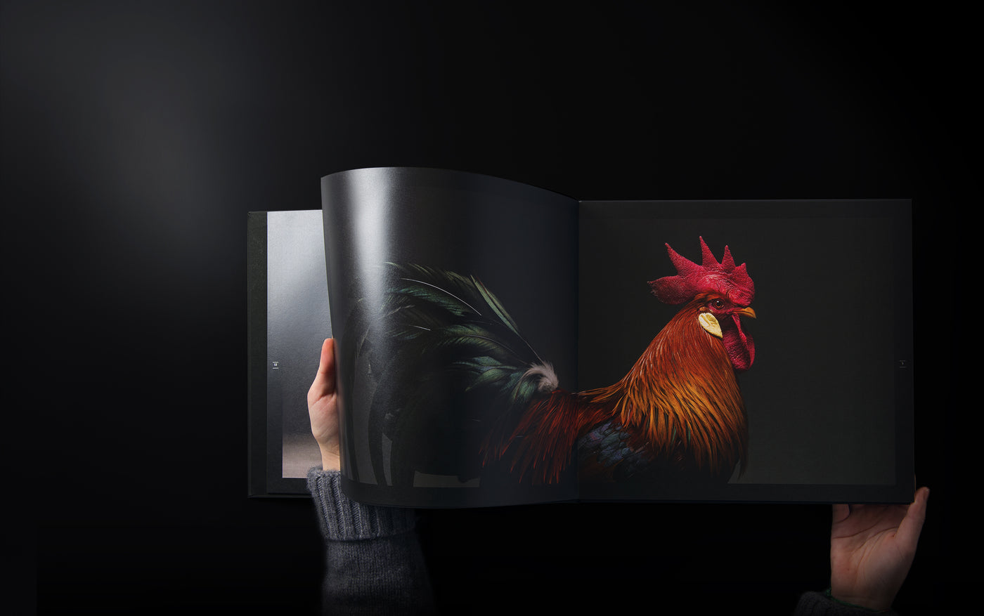 Chicken Collection Book- Atellani