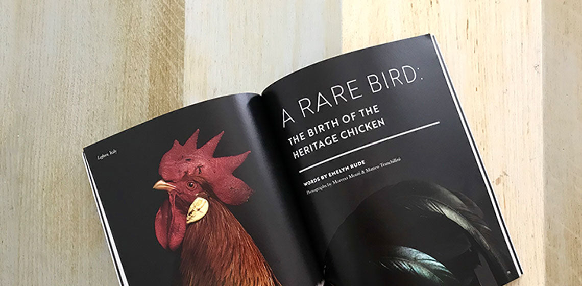 chicken photo, chicken images, Chicken book