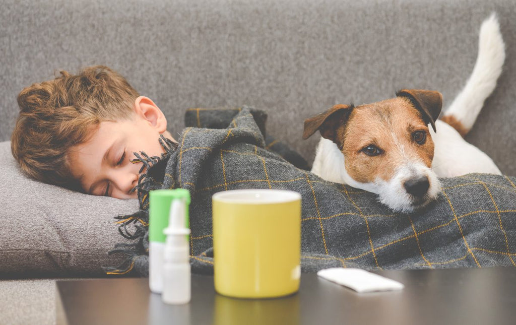 Try these steps first to combat your pet allergy