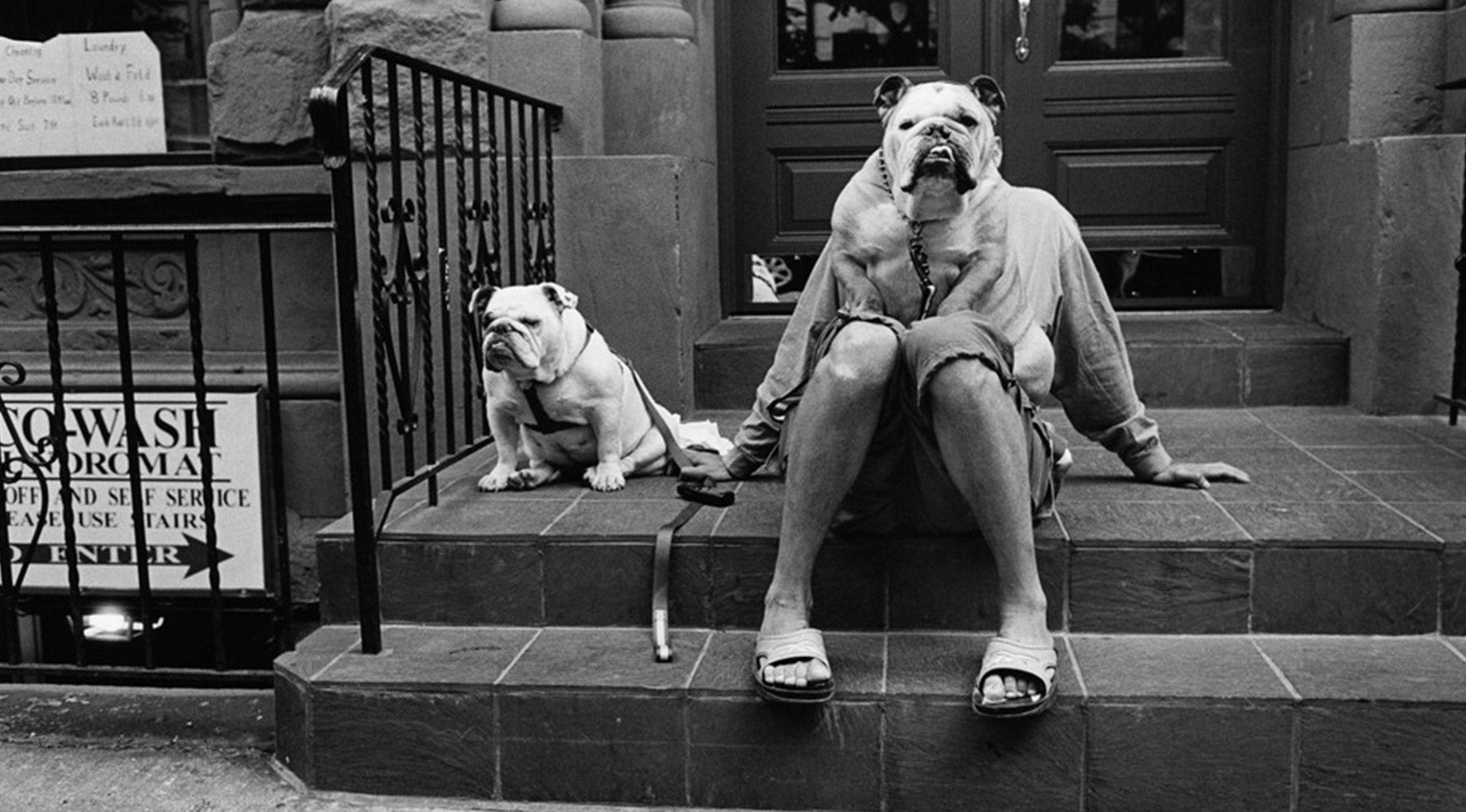 Elliott Erwitt Dogs