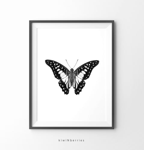Butterfly Monochrome No.1