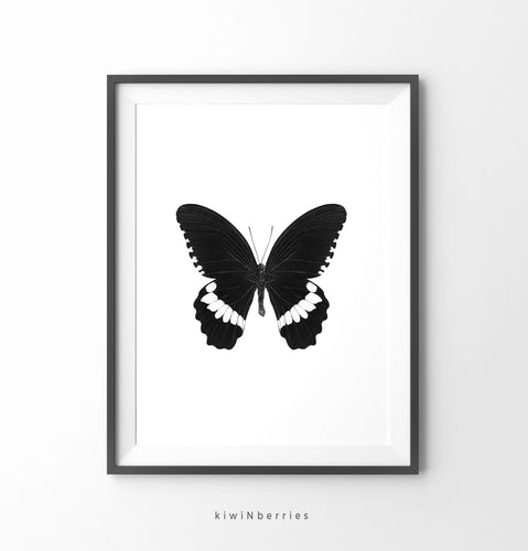 Butterfly Monochrome No.2