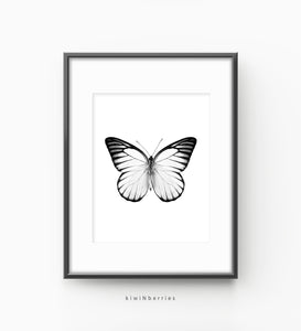 Butterfly Monochrome No.3