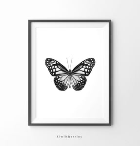 Butterfly Monochrome