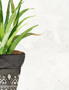 Potted Cactus No. 3