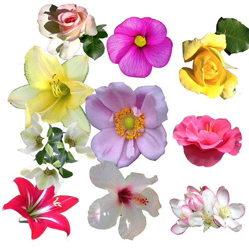 Make a Flower Brooch- Kit 10 pins