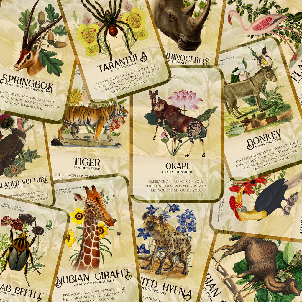 """Flora and Fauna of Africa"" Oracle Deck *PREORDER (MARCH 2021) *"