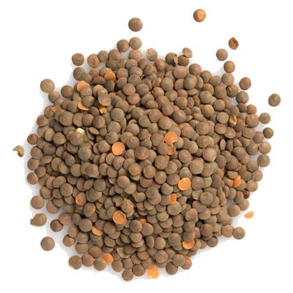 Red Lentil whole 4lb - grocerybasket.ca