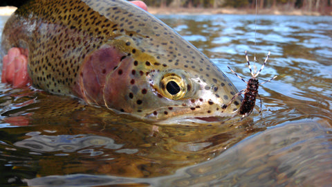 best nymphs for trout