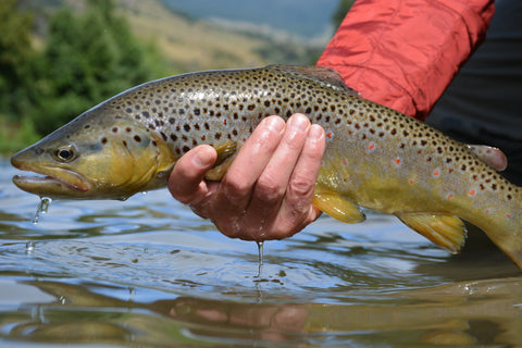 best dry flies for trout