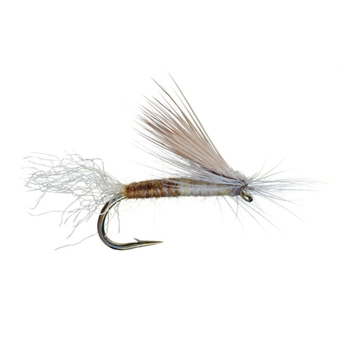 E/C Caddis Cutter Dry Fly by Umpqua