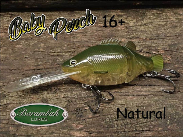 Barambah Baby Perch 16+