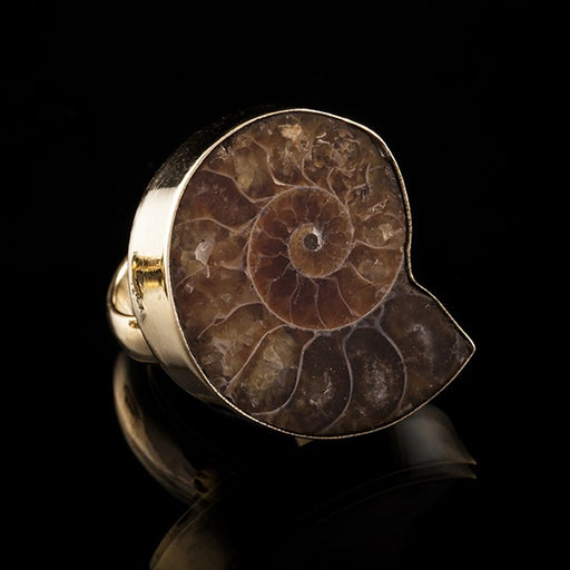 gold ammonite ring