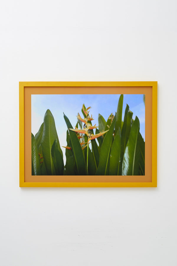 Yellow and green flowers against blue sky, framed.