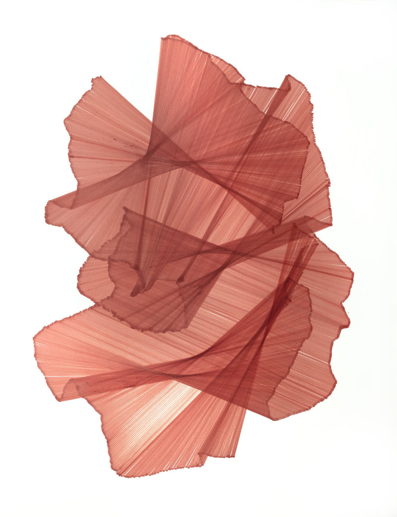 Hundreds of rose-coloured lines intersect and appear to float across the page.