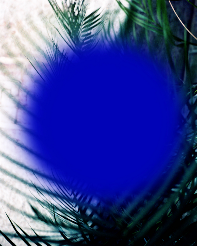 Royal blue dot on background of green palm fronds.