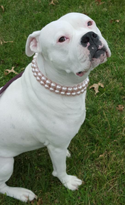 Double Strand Chunky Pink Pearl Collar