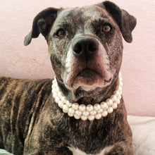 Load image into Gallery viewer, Ivory Triple Strand chunky Pearl Collar